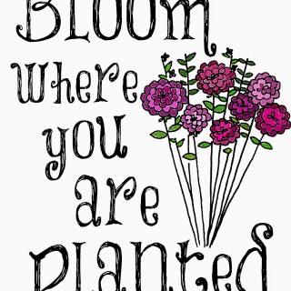 bloomwhereyouareplantedcolor